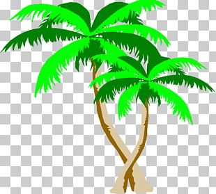 Arecaceae Leaf Plant Stem Tree PNG
