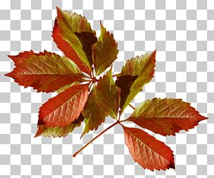 Autumn Leaves Season Daytime Author PNG