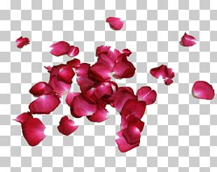 Petal Rose Flower Red PNG