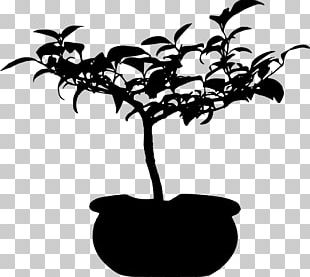 Tree Silhouette Leaf Woody Plant PNG