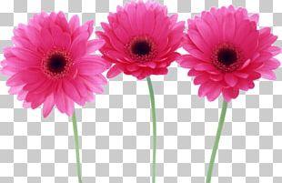 Desktop Flower Child PNG