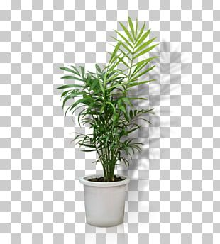 Flowerpot Crock Houseplant Bonsai PNG