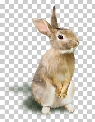 Rabbit Raster Graphics RGB Color Model PNG