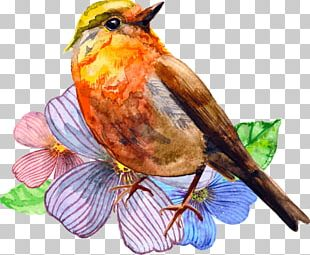 Watercolor Painting Bird Art PNG