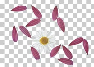Petal Drawing Flower PNG