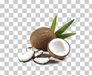 Coconut Milk Coconut Water Fruit Coconut Oil PNG