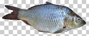Fish PNG