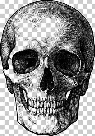Drawing Skull Sketch PNG