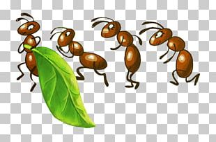 Ant Insect Bee Drawing Aphid PNG