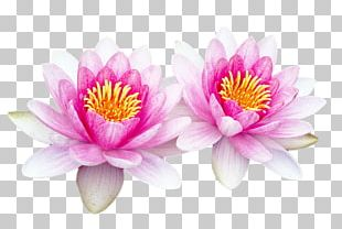 Portable Network Graphics Adobe Photoshop Sacred Lotus Computer Software PNG