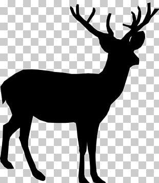 White-tailed Deer Reindeer Moose PNG