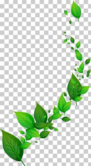 Dynamic Leaf PNG