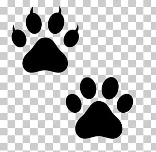 Dog Paw Bear Polydactyl Cat Puppy PNG