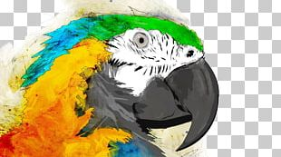 Parrot Bird Watercolor Painting Macaw PNG