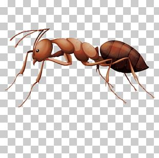 Ant Insect Stock Photography Illustration PNG