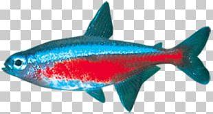 Milkfish Marine Biology Sardine Coral Reef Fish Marine Mammal PNG