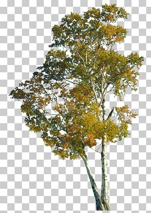 Tree Autumn Branch Trunk PNG