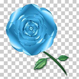 Garden Roses Blue Rose Cabbage Rose Cut Flowers PNG