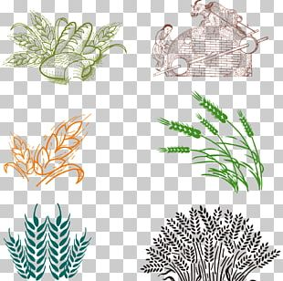 Bakery Common Wheat PNG