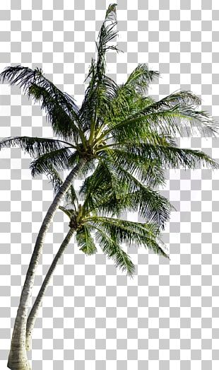 Coconut Tree Computer File PNG