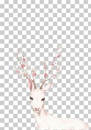 White-tailed Deer Drawing Red Deer Tattoo PNG