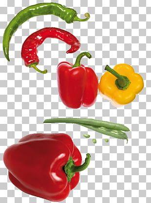 Habanero Piquillo Pepper Serrano Pepper Capsicum Annuum Var. Acuminatum Bell Pepper PNG