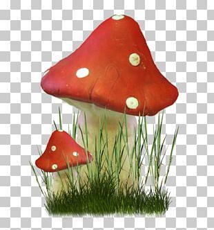 Fungus Mushroom Herbaceous Plant PNG