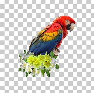 Scarlet Macaw Parrot Blue-and-yellow Macaw Bird Great Green Macaw PNG