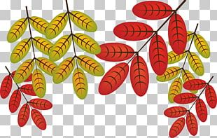 Autumn Leaves Leaf Deciduous PNG