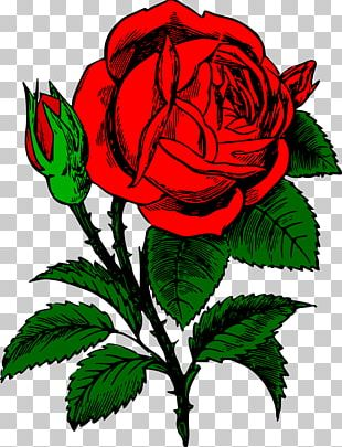 T-shirt Flower Bouquet IPhone 7 Floribunda PNG