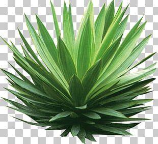 Plant Tree Shrub Drawing PNG