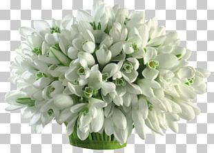 Galanthus Nivalis Flower Bouquet Cut Flowers Bulb PNG