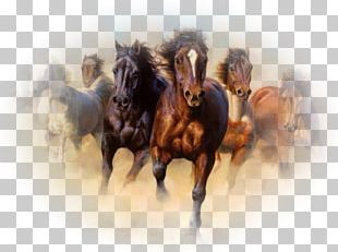Horse Oil Painting Canvas Print PNG