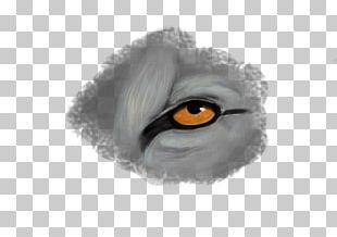 Eyebrow Fur Eyelash Close-up PNG