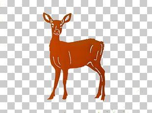 White-tailed Deer Elk Reindeer Antelope PNG