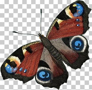 Butterfly Insect Moth Creative Entrepreneurship I Am A Story PNG