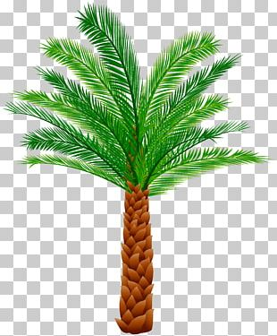 Palm Tree Arecaceae Trees PNG