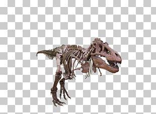 Tyrannosaurus Velociraptor Giganotosaurus Dinosaur Size PNG