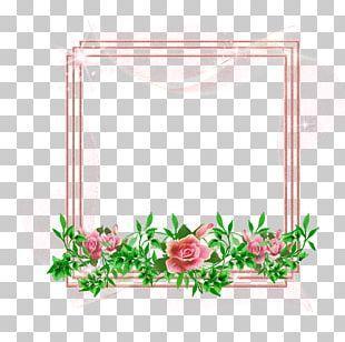 Frames Flower Photography Floral Design PNG