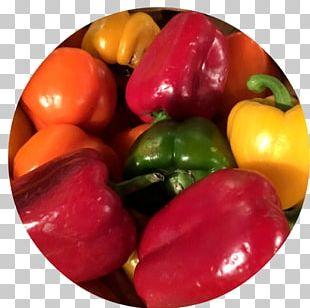 Habanero Piquillo Pepper Bell Pepper Vegetarian Cuisine Paprika PNG