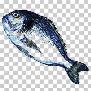 Sardine Fish Products Marine Biology Oily Fish Marine Mammal PNG