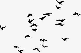 Black Birds PNG