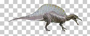 Tyrannosaurus Spinosaurus Kaprosuchus Pachyrhinosaurus Dinosaur Size PNG