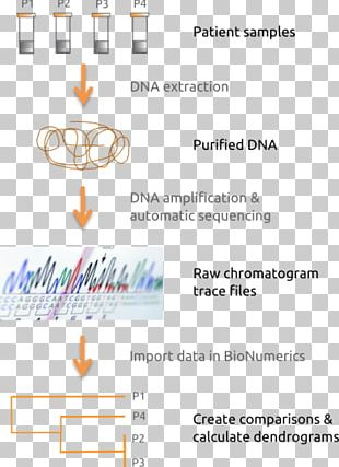 Multilocus Sequence Typing DNA Sequencing Nucleic Acid Sequence PNG