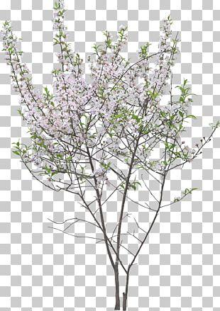 Twig Garden Shrub Tree Flower PNG