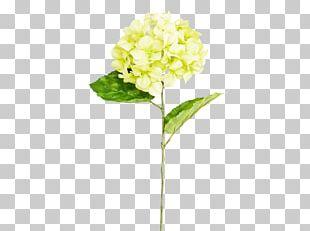 Hydrangea Cut Flowers Plant Stem PNG