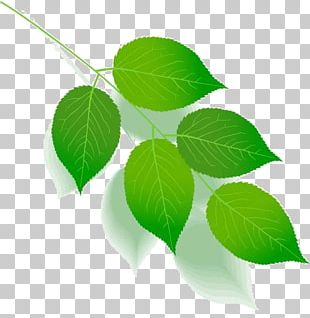 Green Leaf Color Tree Plant Stem PNG