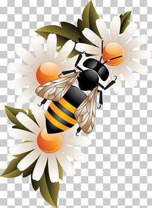 Worker Bee Honey Bee Honeycomb PNG