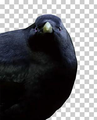 Lemme Smash Bird PNG