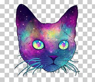 Sphynx Cat British Shorthair Devon Rex Kitten PNG